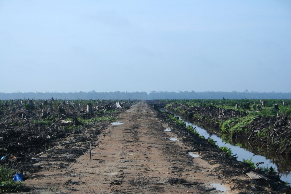 Image courtesy of Hayden (Oil Palm Concession) via Wikimedia commons